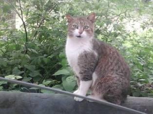 Miky, 15 anni