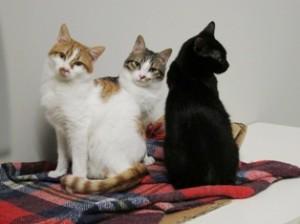 Brandy, Coctail e Nerino